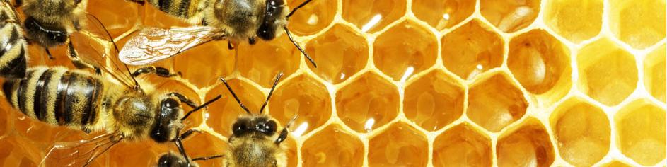 miere si produse apicole targu mures